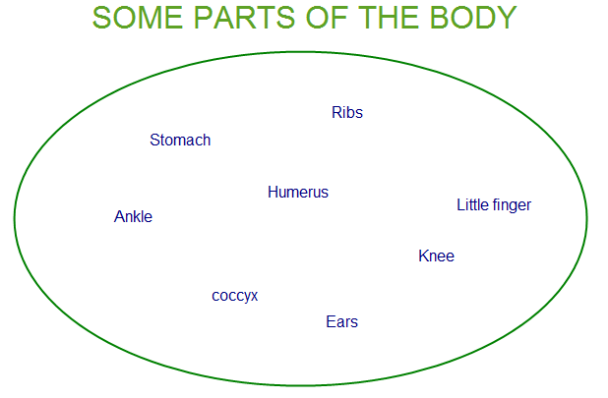 ankle stomach ribs humerus ears etc